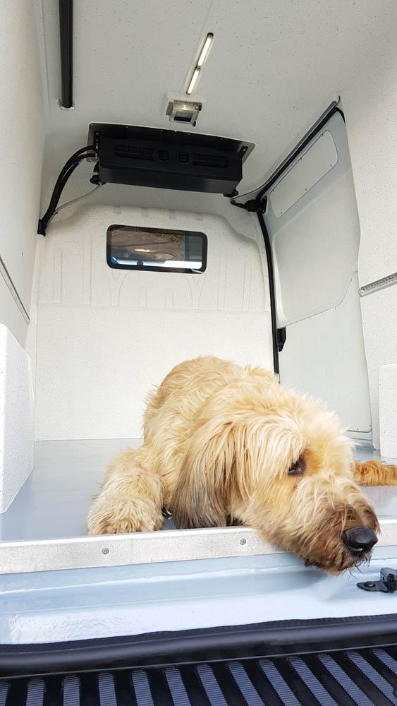 Fahrzeugausstattung in einem Transporter zum Tiertransport